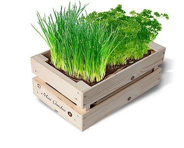 """Minigarten Kisten """"Bio-Schnittlauch-Petersilie"""""""