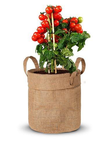 """Balkongarten Jutebeutel """"Tomate"""""""